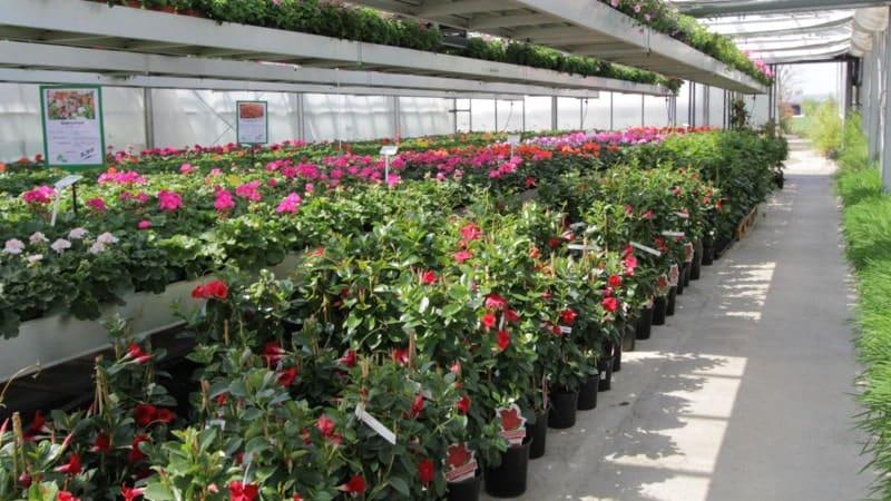 Topfpflanzen aus unserer Produktion