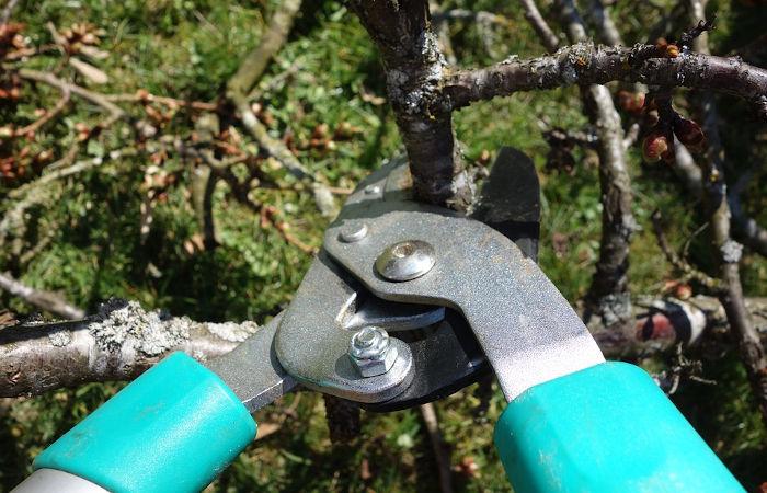 Der richtige Baumschnitt für einen gesunden Baum