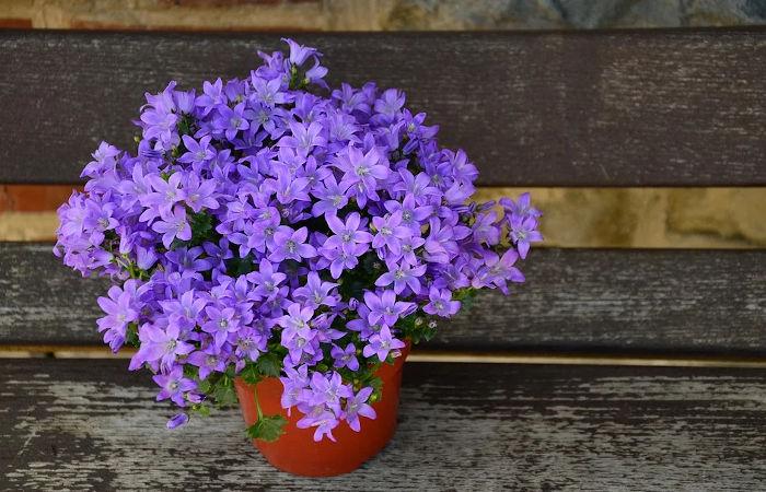 Bepflanzter Blumentopf