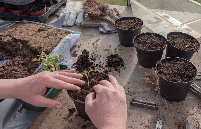 Unser Pflanzservice zum Bepflanzen der Gefäse